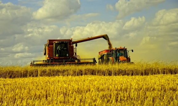 Ячмінь уже вирощувати невигідно, пшениця - на межі, - фермер фото, ілюстрація