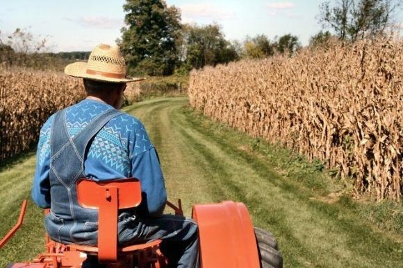 """Ринок малих виробників сільгосппродукції почав """"відбілюватися"""" фото, ілюстрація"""
