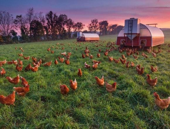 Європейські фермери отримають €435 млн з бюджету CAP фото, ілюстрація