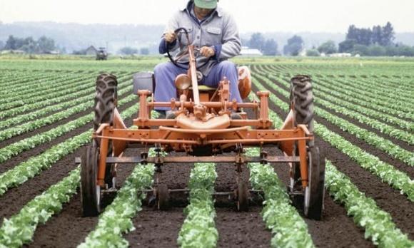 Щоб земельна реформа відбулась, потрібно переконати дрібних фермерів, - економіст фото, ілюстрація