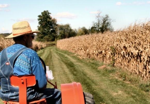 Более полумиллиона подписчиков: в США фермеры зарабатывают на YouTube больше, чем на своих фермах фото, иллюстрация