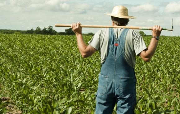 """Українському фермерству не завадить """"лікнеп"""", - Трофімцева фото, ілюстрація"""