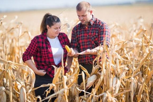 Эксперт объяснил, почему американский сценарий развития малого фермера наиболее подходит Украине фото, иллюстрация