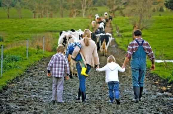 Схвалено проєкт закону, який передбачає зміни до законодавства в частині підтримки фермерських господарств фото, ілюстрація
