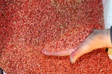 Инновационную технологию протравливания семян внедрили на семенном заводе DuPont Pioneer фото, иллюстрация