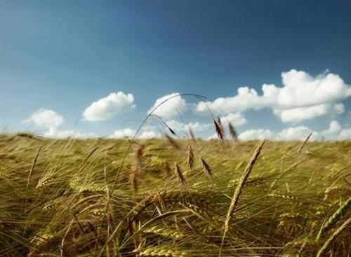 Аграрии 8 областей приступили к уборочным работам фото, иллюстрация