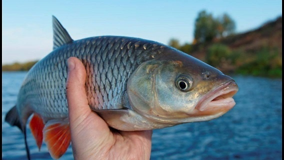 Браконьєри виловлюють риби на 4 млрд грн. щорічно фото, ілюстрація