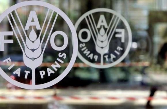 FAO підтримає кооперативний рух у Луганській і Донецькій областях фото, ілюстрація