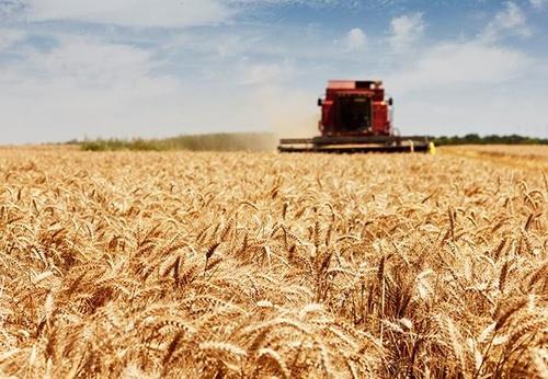 Недооцінка основних засобів сільського господарства негативно впливає на визначення рентабельності та дохідності галузі, – Інститут аграрної економіки фото, ілюстрація