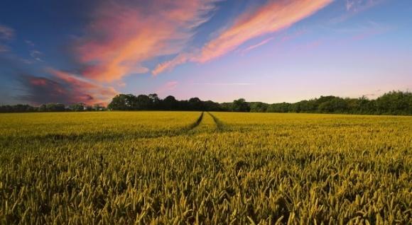 Запропонована законопроєктом № 3131 модель детінізації агробізнесу призведе до згортання малих форм господарювання на селі, — ННЦ фото, ілюстрація