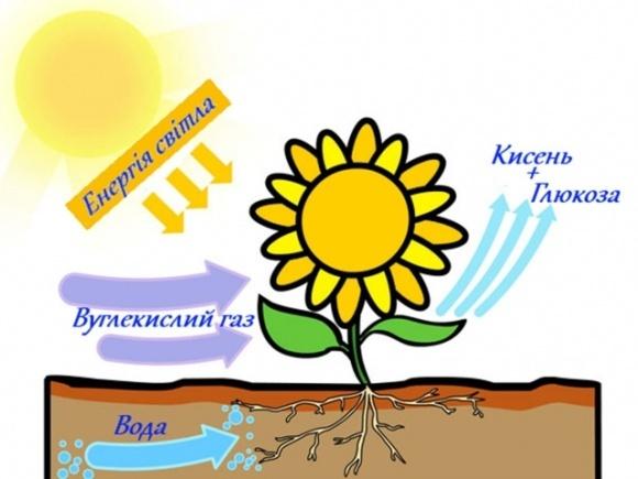 Британские ученые заявили, что могут усовершенствовать фотосинтез с целью повышения урожаев фото, иллюстрация