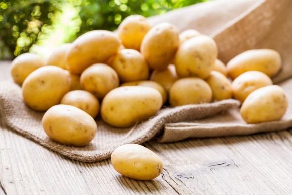 На Волині створюють перший кооператив виробників картоплі фото, ілюстрація