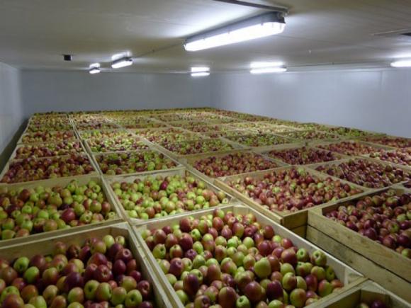 В Украине выращивается 2 млн т фруктов, но хранить можно только 250 тыс. т фото, иллюстрация