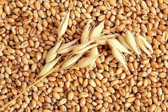 Нужно диверсифицировать рынки экспорта зерна, - УЗА фото, иллюстрация