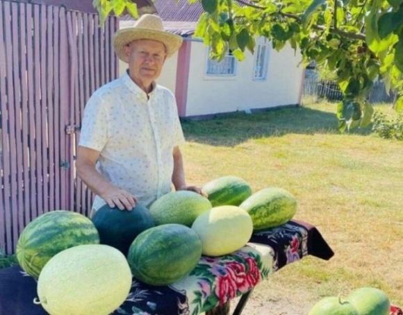 На Волыни фермер выращивает холодостойкие сорта арбузов фото, иллюстрация