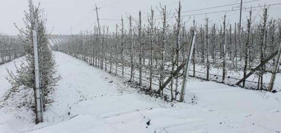 Украина потеряла львиную долю урожая черешен и абрикос фото, иллюстрация
