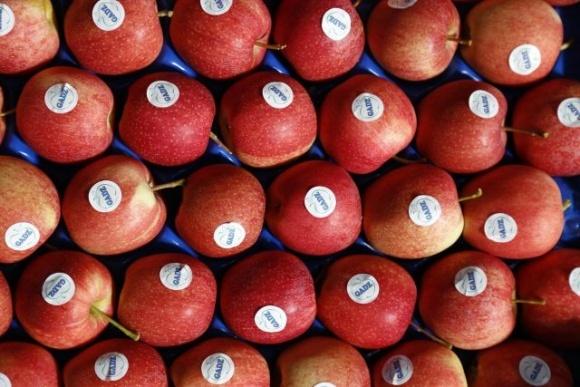 ФГ «Гадз» начало экспортировать яблоки в Великобританию фото, иллюстрация