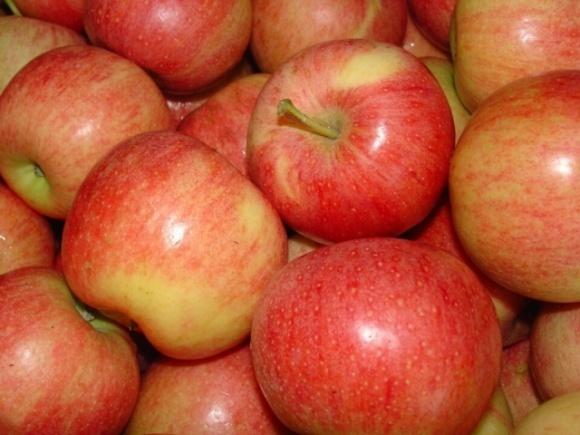 Украинская «Гала» опаздывает на две недели, но цены на яблоко уже низкие фото, иллюстрация