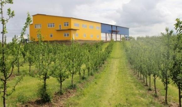 На Львовщине фермер выращивает персики и вишни с помощью собственной метеостанции и интернет-технологий фото, иллюстрация