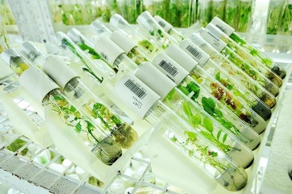 Україна втрачає до півмільярда доларів на рік, відмовляючись визнавати ГМ-рослини фото, ілюстрація