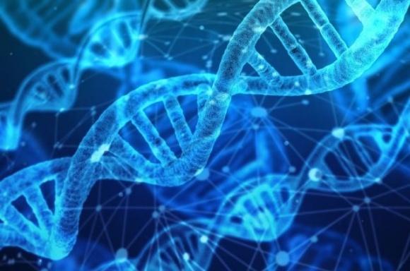 Велика Британія розглядає можливість дозволу генетичного редагування фото, ілюстрація