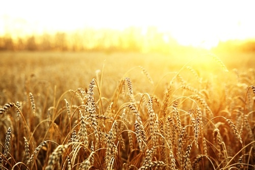5 аграрних асоціацій об'єдналися у Всеукраїнський аграрний форум фото, ілюстрація