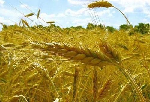 Аграрный комитет будет рекомендовать Раде законопроект о рынке земли фото, иллюстрация