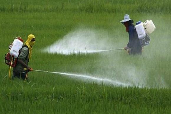 У Китаї почнуть продавати гербіцид із сумішшю гліфосату і глюфосинату фото, ілюстрація