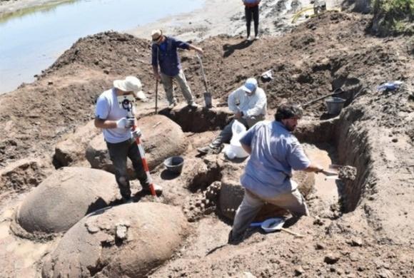 Фермер нашел останки вымерших 10 тысяч лет назад глиптодонов фото, иллюстрация