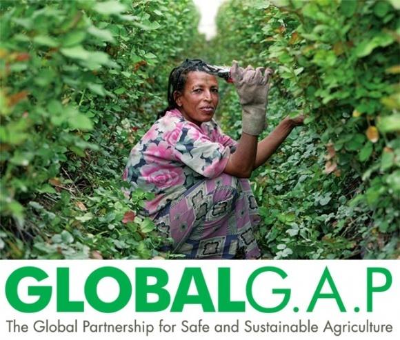 Сертифікати GlobalGAP популярні в ягідних і фруктових господарствах фото, ілюстрація