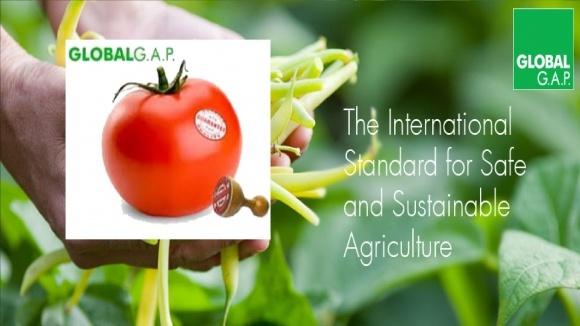 GlobalGAP целесообразно внедрять при закладке ягодной плантации фото, иллюстрация