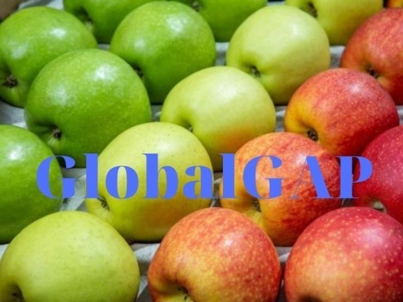 Найчастіше сертифікат GlobalGAP у 2020 році отримували на яблука і лохину фото, ілюстрація