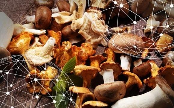 В Україні очікується, що виробництво екзотичних грибів збільшиться вдвічі фото, ілюстрація