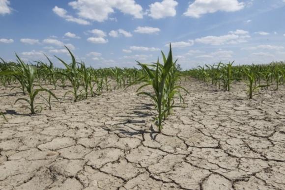 Глобальное потепление грозит потерями для отечественных агропроизводителей, — аналитик фото, иллюстрация