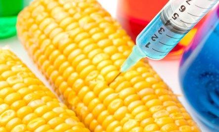 ГМ-кукурудзу объявили более полезной, чем обычную фото, иллюстрация