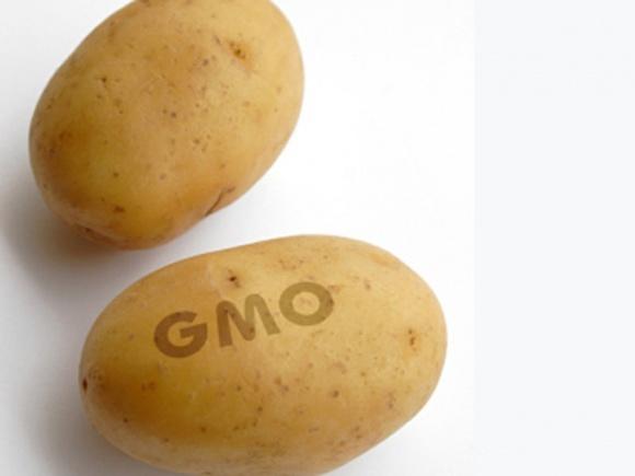 Канада призупинила вирощування ГМО-картоплі на рік фото, ілюстрація