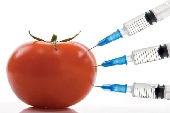 В Україні ретельніше відслідковуватимуть ГМО фото, ілюстрація
