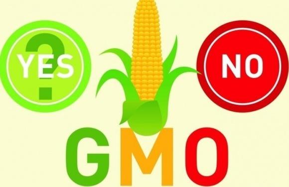 В создании ГМО-растений используют существующие в природе процессы фото, иллюстрация