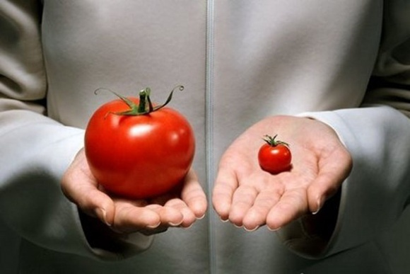 Євродепутати виступили проти імпорту ГМ-кукурудзи та бавовни фото, ілюстрація