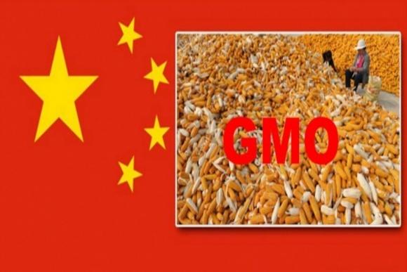 Китай одобрил импорт двух новых сортов ГМО и возобновил 14 других фото, иллюстрация