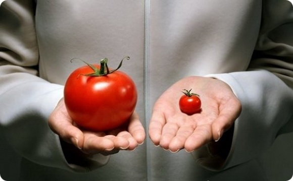 ГМ-овощи признали бесперспективными? фото, иллюстрация