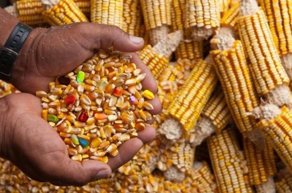 В ВРУ предлагают ввести госконтроль за ГМО-продукцией фото, иллюстрация