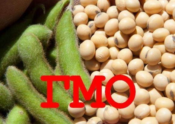 В Украине нелегально выращивают генно-модифицированные сою, рапс и кукурузу, — USDA фото, иллюстрация