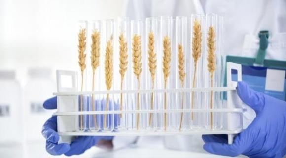 Франція не підтримує рішення ЄС накласти ГМО-обмеження на метод редагування генів фото, ілюстрація