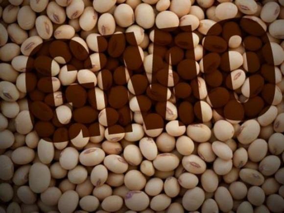 Єврокомісія дозволила використання генетично модифікованої сої для виробництва продовольства й кормів фото, ілюстрація