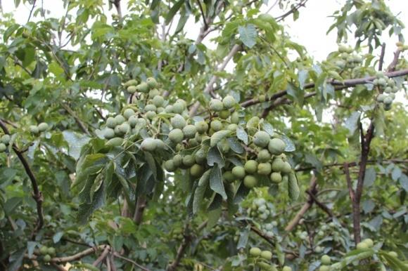 Почалось обговорення міжнародного проекту сприяння експорту українських горіхів фото, ілюстрація