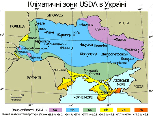 Чандлер в Украине: миф или реальность глазами экспертов ореховой отрасли фото, иллюстрация