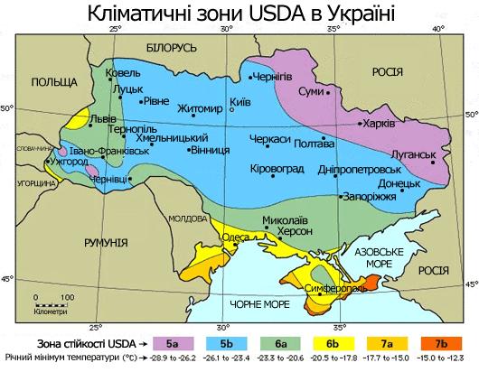Чандлер в Україні: міф чи реальність, очима експертів горіхової галузі фото, ілюстрація
