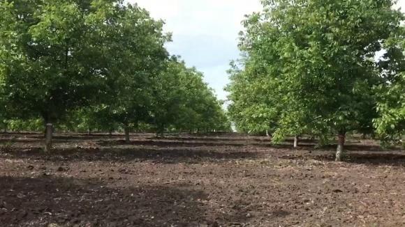 На Вінниччині заклали горіховий сад площею понад 700 га фото, ілюстрація