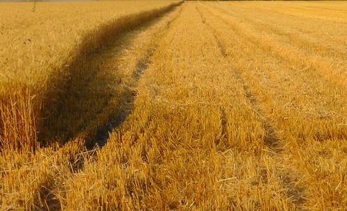 Турецька компанія планує вдвічі збільшити земельний банк в Україні фото, ілюстрація